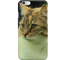 Ginger and White Cat iPhone Case/Skin