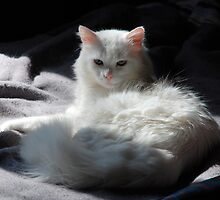 White Cat on Grey Blanket by jojobob