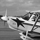 Flying away by Sara Sadler