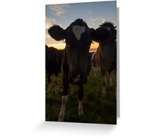 Bovine Sunset Greeting Card