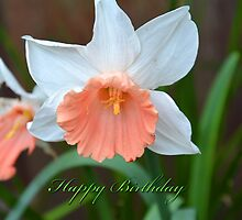 Daffodul Happy Birthday Card by walstraasart