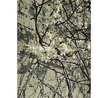 Blossom Wall Photographic Print