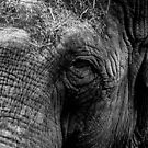 The Eye of the Elephant by LucyOlver