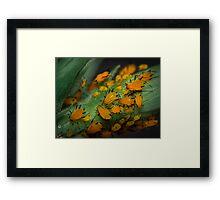Aphids Illuminated Framed Print