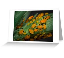 Aphids Illuminated Greeting Card