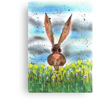 HARE IN DAFFODILS Canvas Print