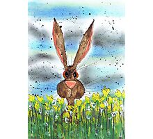 HARE IN DAFFODILS Photographic Print