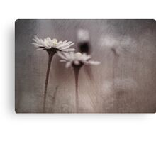 Dark Daisy... Canvas Print