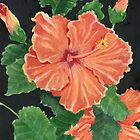 Showy Hibiscus by Marsha Elliott