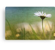 Dazzling Daisy... Canvas Print