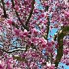 Tulip Tree by Susan S. Kline