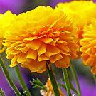 Pretty Yellow Flowers by Susan S. Kline