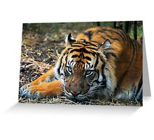 Tiger resting in the rain Greeting Card