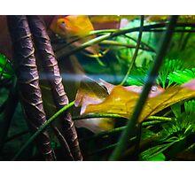 Aqua World : Green Tank Photographic Print