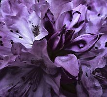 The Color Purple by RVogler