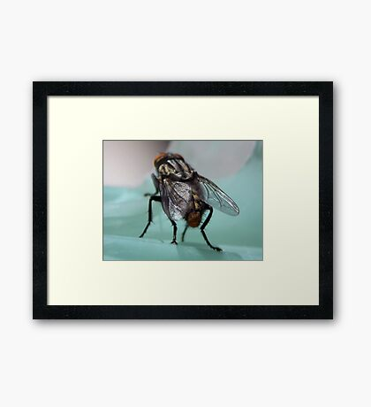 ©NS Wings For Flying IA Framed Print