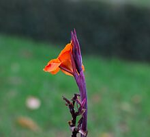 Lone Bright Flower by Jonathan Lynch