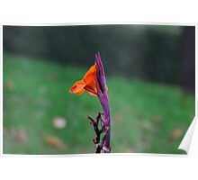 Lone Bright Flower Poster
