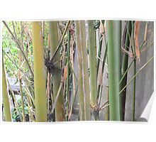 Bamboo & Earth Poster