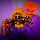 Bee on Spring Crocus #12 by Kane Slater