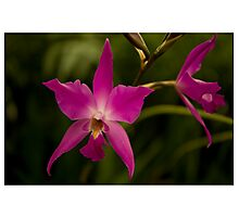 Hobart Botanical Gardens Flower  Photographic Print
