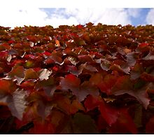 Red leaves of autumn  by eisblume