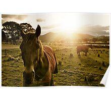 The Royalla Horses Poster