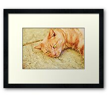 Ginger cat relaxing Framed Print