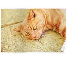 Ginger cat relaxing Poster