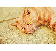 Ginger cat relaxing Photographic Print