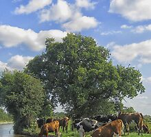 Canalside scene with cows by Mortimer123