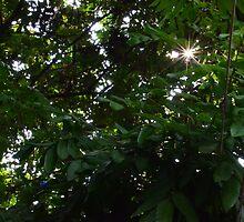 Through Leaf by fotosvn