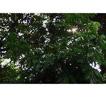 Through Leaf Photographic Print