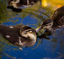 Kissing ducks  by eisblume