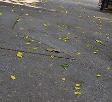 Flower Drop by fotosvn