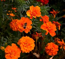 :) Orange flowers and bee  by eisblume