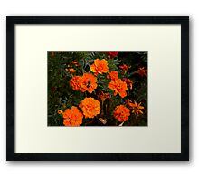 :) Orange flowers and bee  Framed Print