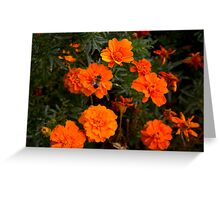 :) Orange flowers and bee  Greeting Card
