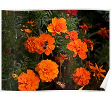 :) Orange flowers and bee  Poster
