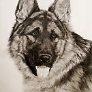 German Shepherd portrait by Istvan Natart