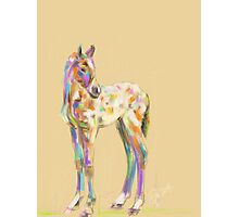 Foal paint Photographic Print