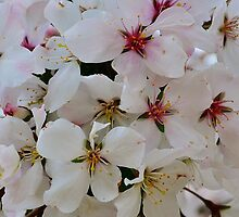 Flowers at Alnwick Gardens by daran6795