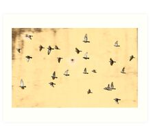 Jaipur Birds Art Print