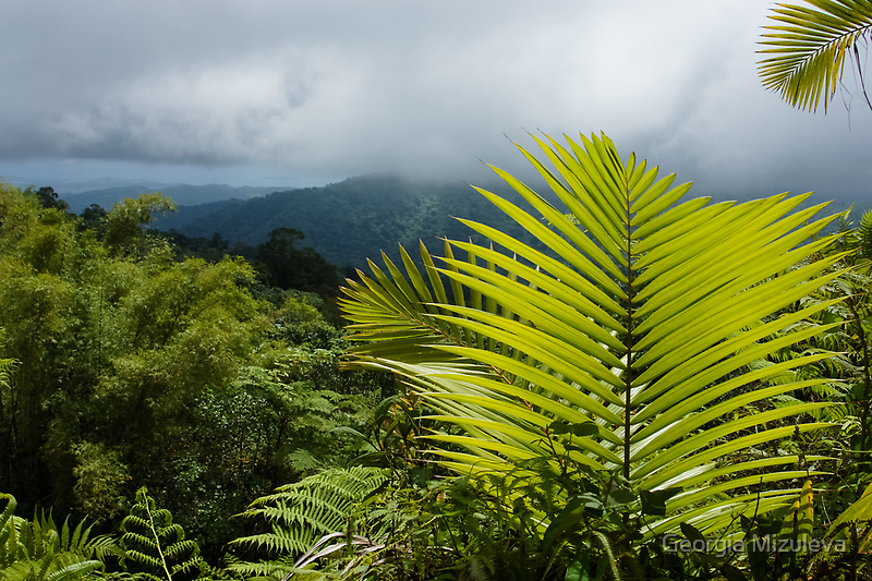 Tropical Rainforest - Jungle Green and Rain Clouds by Georgia Mizuleva