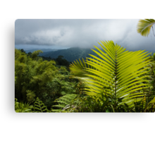Tropical Rainforest - Jungle Green and Rain Clouds Canvas Print