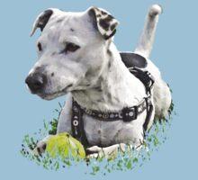 Jack : Jack Russel Terrier x Staffy Kids Clothes
