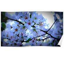 Kenwood Blossoms Poster