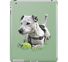 Jack : Jack Russel Terrier x Staffy iPad Case/Skin