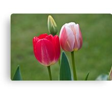 Red and Pink Tulips Canvas Print