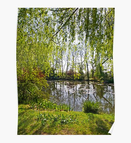Through the Willow Trees Poster